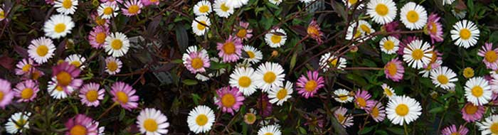 A Selection of Autumn Flowering Plants